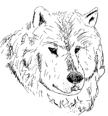 Dessin Coloriage Animal Tete De Loup Dessin Pinterest