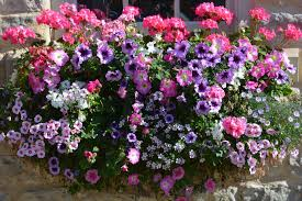 See more ideas about flowers, flower arrangements, flower boxes. Flower Boxes That Thrive In The Sun Window Box Flowers Container Gardening Flowers Container Flowers