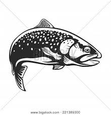 realistic drawing of the rainbow trout jumping out water sketch isolated on white background