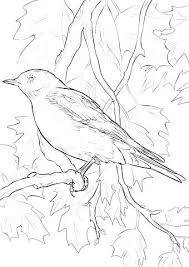 Eastern Bluebird Coloring Page Brown Thrasher Pages Of Blue Bird Jay