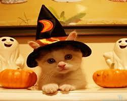「cute halloween pics」の画像検索結果