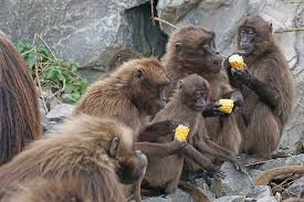 """Résultat de recherche d'images pour """"famille de singes"""""""