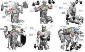 Gym Guider Workout Routines Training Plans Abs Workouts