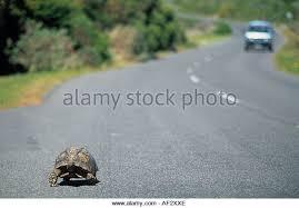 tortoise upside down in road ile ilgili görsel sonucu