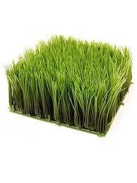 Decorative Wheatgrass Trays