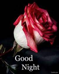 Rose Good Night Wallpapers - Wallpaper Cave