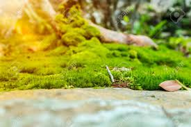 Pretty Nature Background Closeup Moss On Rock With Bright Sunlight