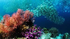 underwater ocean wallpapers. Delighful Wallpapers 1920x1200 Underwater  Throughout Ocean Wallpapers S