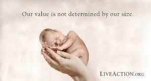 Pro Life Quotes Interesting Prolifequotes48 Church Of St Anthony Of Padua