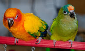Types Of Conures A Guide To 10 Popular Choices Of Pet