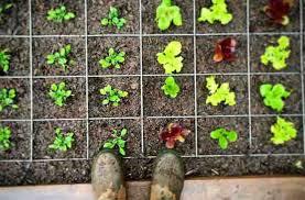 planting templates