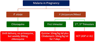 Treatment Of Malaria Malaria Site