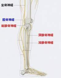 脛骨 神経 麻痺