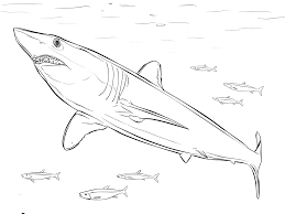 Small Picture Sharks Coloring Pages 5554 670867 Free Printable Coloring Pages