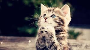 cute cats wallpapers hd cute kitten look up wallpaper