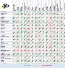 Saltwater Fish Compatibility Chart Marine Compatibility Chart Related Keywords Suggestions