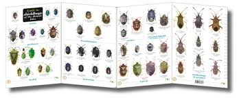 Bug Id Chart Insect Identifier Uk Best Image Home In The Word