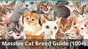 The Ultimate Guide To Different Types Of Cat Breeds 100
