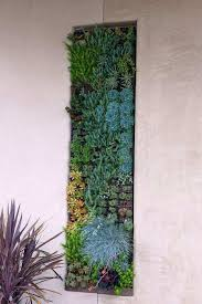 succulent wall art lovely surprising succulent framed wall art decorating ideas