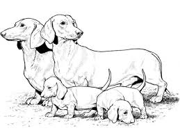 Realistic Puppy Coloring Pages Printable Coloring