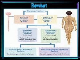 Nervous System Group2 Final