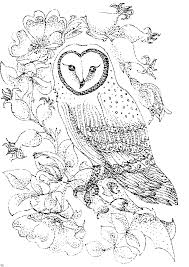 Small Picture Bird Coloring Pages Barn Owl and Wild Roses