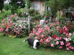 Small Picture Simple Design Ideas Rose Garden Plans flowers Pinterest