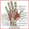 Как сделать сильно кисти своих рук