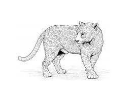 Leopard Coloring Pages Lovely Animal Jam Coloring Pages Free