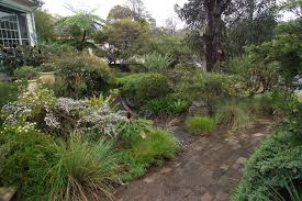 Small Picture Australian native front garden Outdoor spaces Pinterest