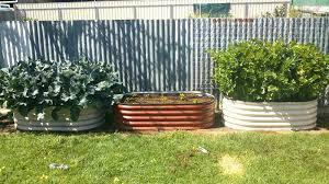 steel garden beds raised garden beds steel garden beds bunnings