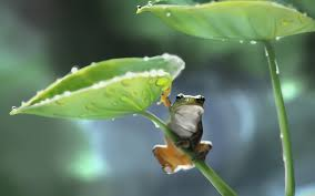 1190817 / tree frog : image, wall, pic