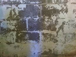 paint for damp basement walls pictures