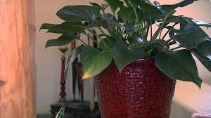Star Nursery Dr Q Indoor Gardening Houseplants