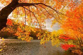 寂寞梧桐深院锁清秋,落叶可知秋,秋天的景色让人陶醉其中_手机网易网