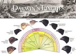 charles darwin in galapagos com biological evolution of the galapagos