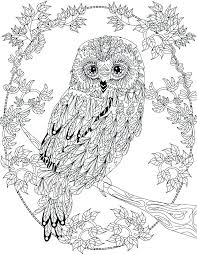 Printable Owl Coloring Pages Snowy Owl Coloring Pages Owl Coloring