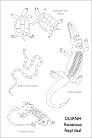 Small Picture Ravenous Reptiles Colouring Sheet Turtle Coloring Pages In