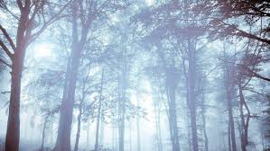 nature forest mist trees bright