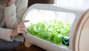 Hydroponic Kitchen Garden Foop Is A Hydroponic Garden For Urbanites Digital Trends