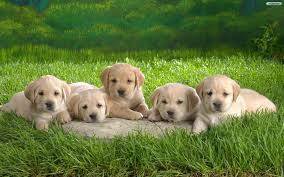 Free download Cute Puppy Desktop ...