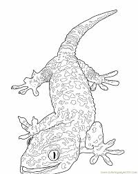 Small Picture Lizard Coloring Pages