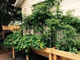 Container Gardening Ideas For Small Gardens  161  HostelgardennetContainer Garden Plans Pictures