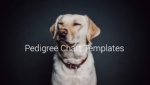 Blank Pedigree Chart For Dogs Free Pedigree Chart Template 9 Free Sample Example Format