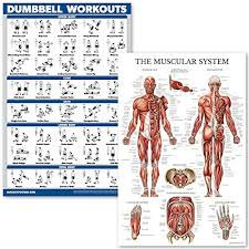 Quickfit Dumbell Workouts And Muscular System Anatomy Poster Set Laminated 2 Chart Set Dumbbell Exercise Routine Muscle Anatomy Diagram