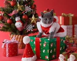 christmas-kitten-desktop-wallpaper.jpg ...