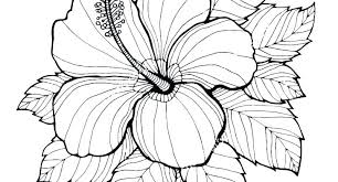 Spring Flower Colouring Pages Coloring Pdf For Adults Printable