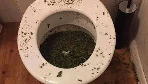 not just the pot cops also found a bathtub filled with plants individual plants grown in the shower and trays all over the bathroom