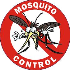florida mosquito season
