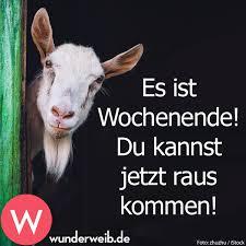 Whatsapp Lustig Schönes Wochenende 47 Lol Images Of Schönes